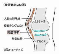 膝蓋靭帯の位置
