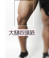 大腿四頭筋1