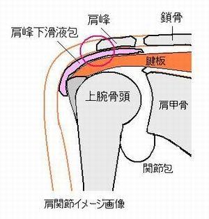 肩関節イメージ図